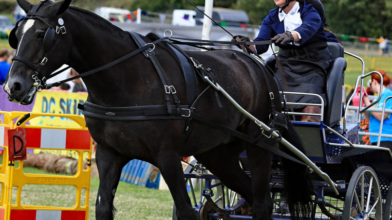 Isle of Man Royal Manx Agricultural Show 7th & 8th August 2020 Mini Break